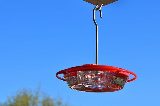 dish type feeder