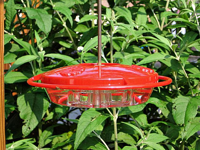 Hummingbird feeder maintenance is important to keep hummingbirds coming back.